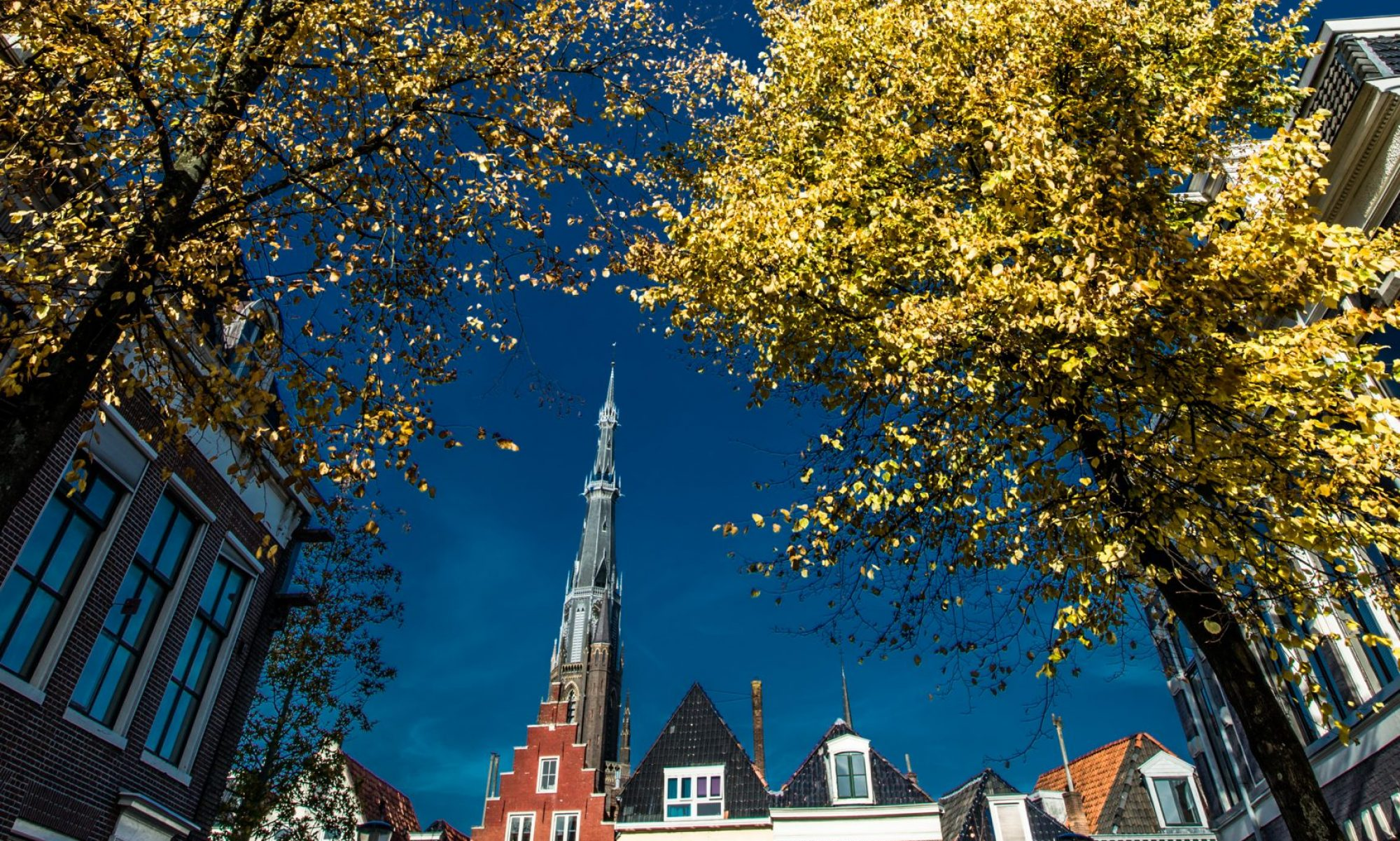 Bomenridders Leeuwarden