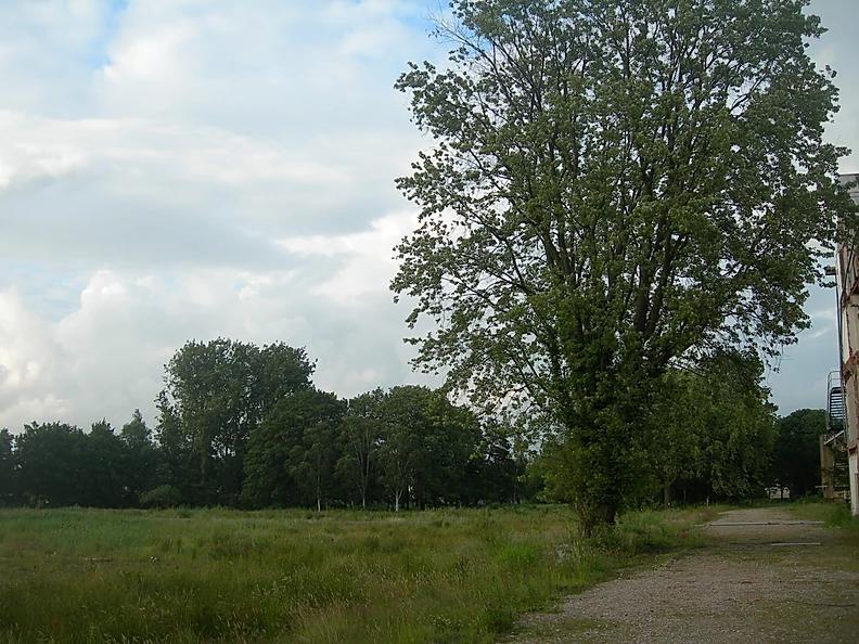 De Bonifatiusboom 2007